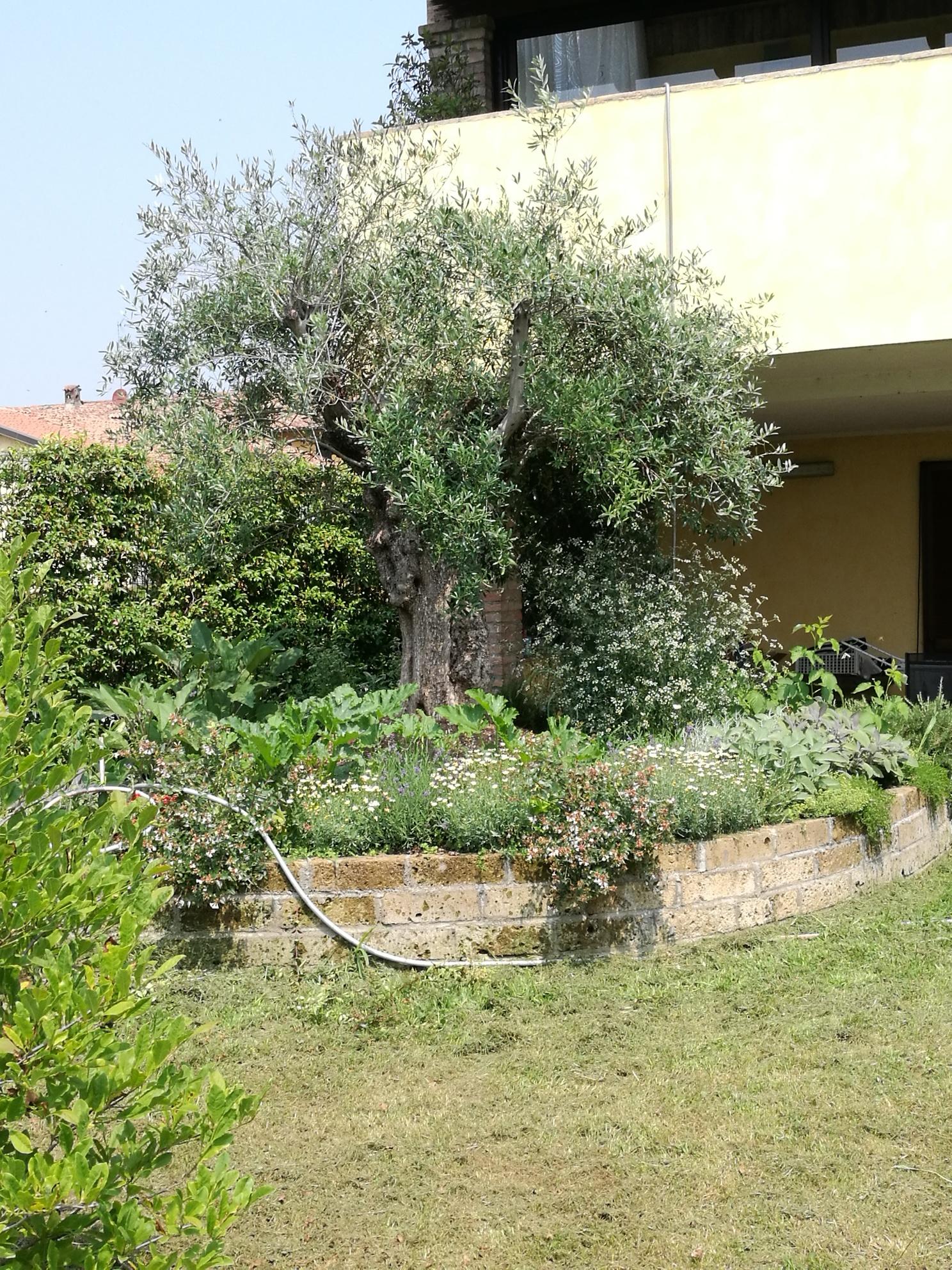 Progettare Un Giardino In Campagna il giardino della fenice |